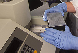 Photo: PCR assay