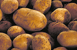 Photo: Potatoes.