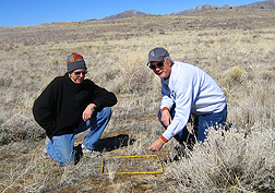 Photo: Two scientists counting cheatgrass seedlings in a measured square. Link to photo information