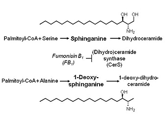 Drawing: Chemical structure of fat showing a change from the amino acid serine to alanine.