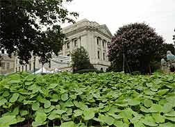 Photo: The People's Garden in front of the Jamie Whitten USDA Building in Washington DC.