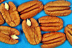 Photo: Pecans from new cultivar Mandan.