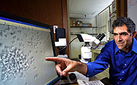 ARS chemist Reuven Rasooly studying spleen cells replication on a computer screen. Link to photo information