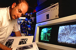 Photo: Scientist examining nematodes. Link to photo information