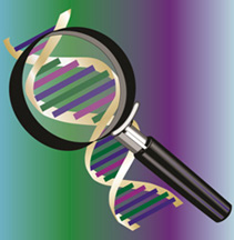 Photo: Illustration of magnifying glass showing an enlarged section of a DNA double helix.