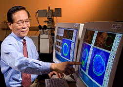 Photo: ARS molecular biologist Daniel H. Hwang studies scans of receptors involved in inflammation. Link to photo information