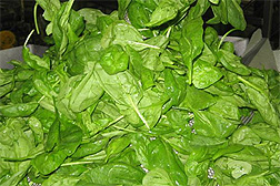 Photo: Spinach leaves.