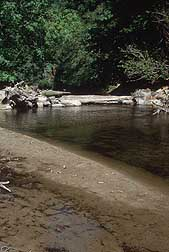 Photo: Creek with shallow water showing underwater sediment.