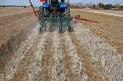 Photo: Field being planted with strip tilling.