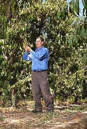 Photo: ARS soil scientist Dong Wang examines leaves of a peach tree. Link to photo information