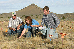 Photo: Rangeland scientist Tony Svejcar (left), technician Lori Ziegenhagen and plant physiologist Jeremy James examine blue bunch wheatgrass. Link to photo information