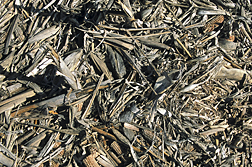 Photo: Corn residues including corn cobs left in a no-till field.