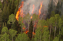 Photo:  Forest fire beginning to burn trees.