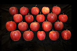 Photo: Gala apples. Link to photo information