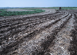 A field of crop residues.